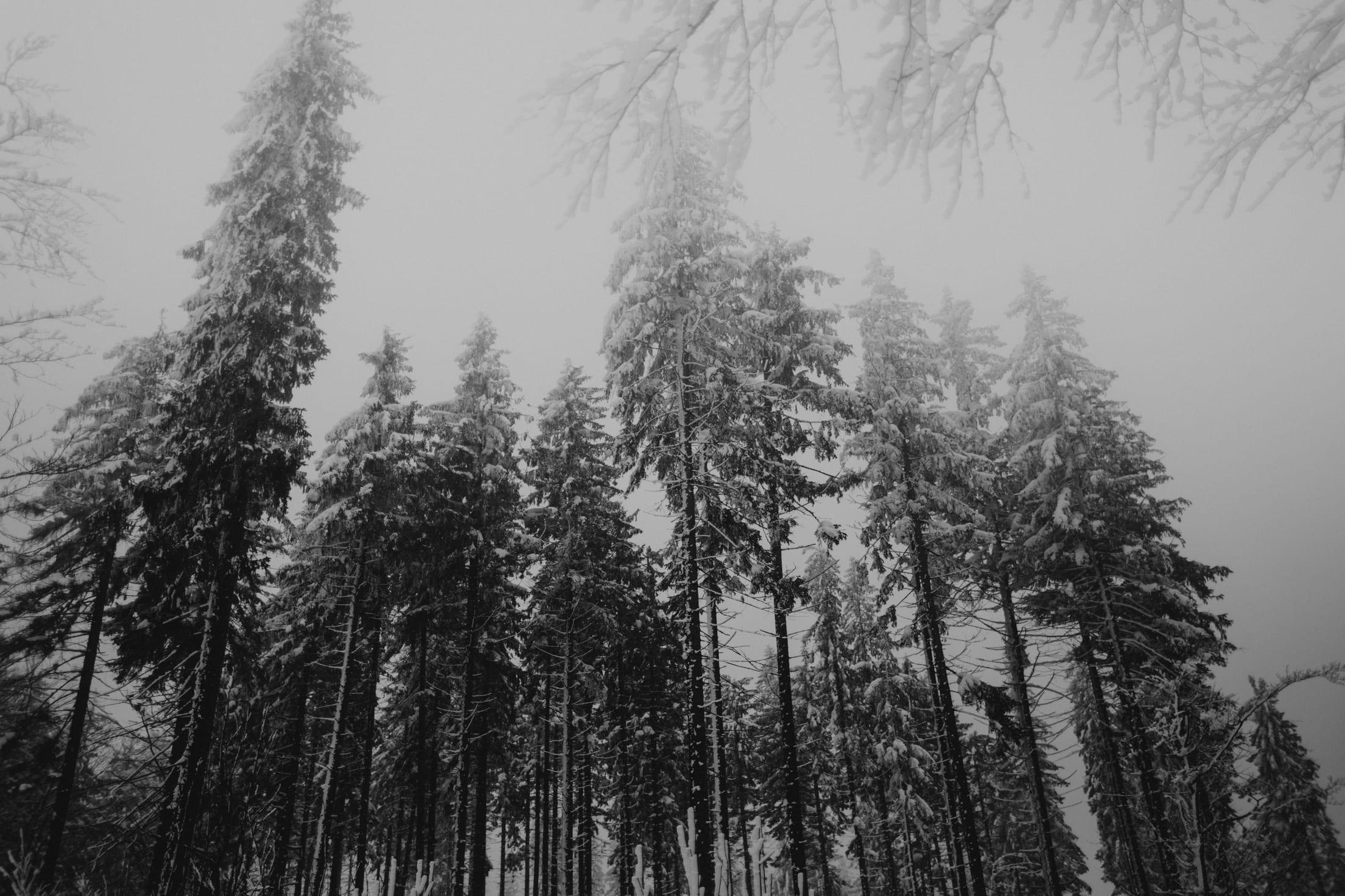 Kasia & Mariusz <br>Zimowa sesja w górach 20
