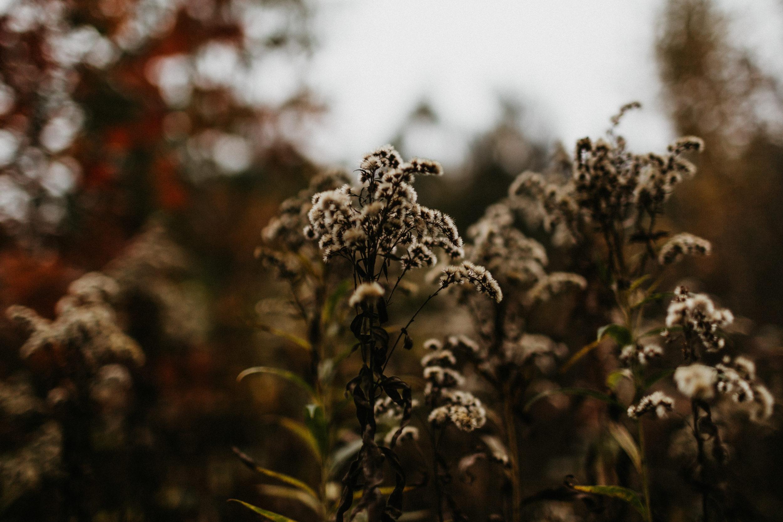 jesienna sesja rodzinna fotografia gliwice 00013